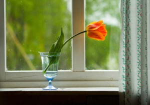 Guide to Energy Efficient Replacement Windows